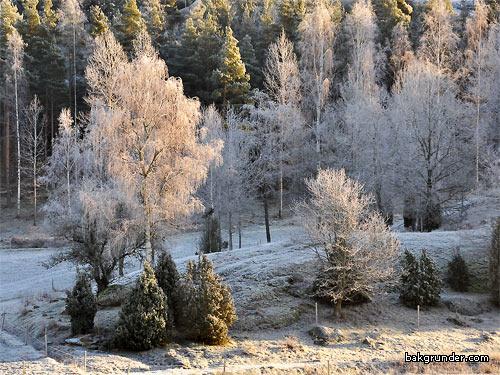 Frostig bakgrundsbild
