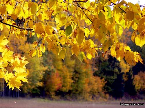 Höstens bilder