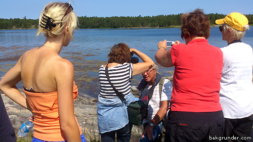 Apollofjärilsfotografer Åsvikelandet 2013