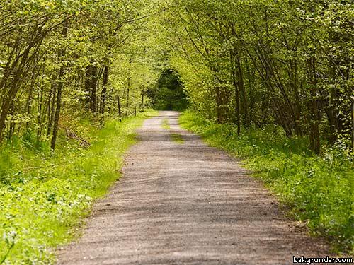 Lövskogsklädd grusväg