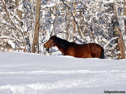Häst i en hästhage under vintern