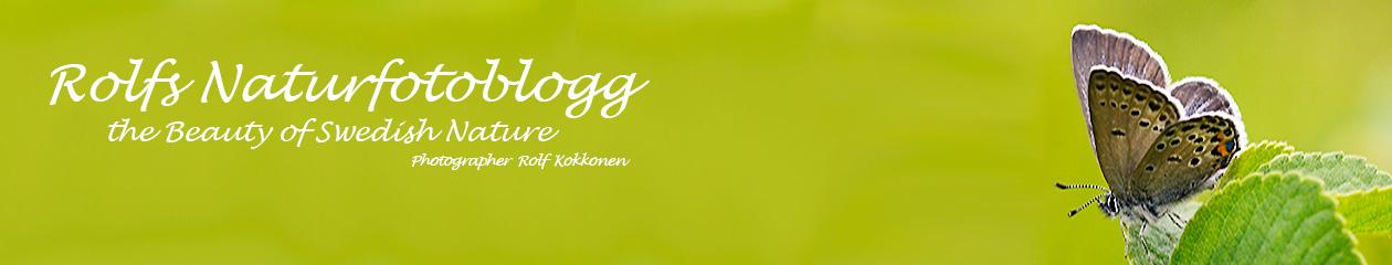 Rolf´s Naturfotoblogg