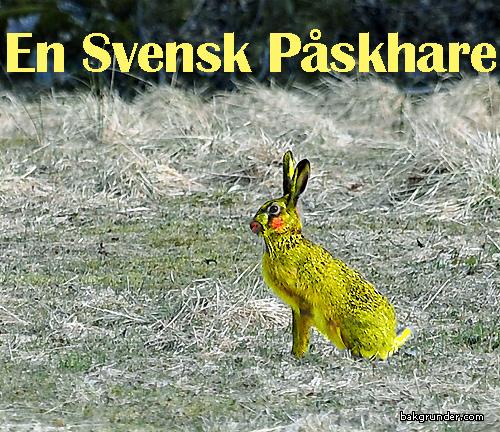 Svensk Påskhare