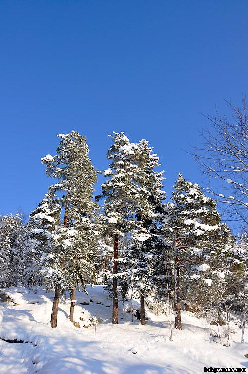 Härlig vinterbild