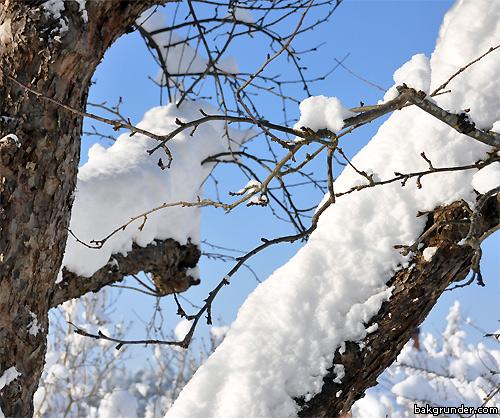 Mycket snö