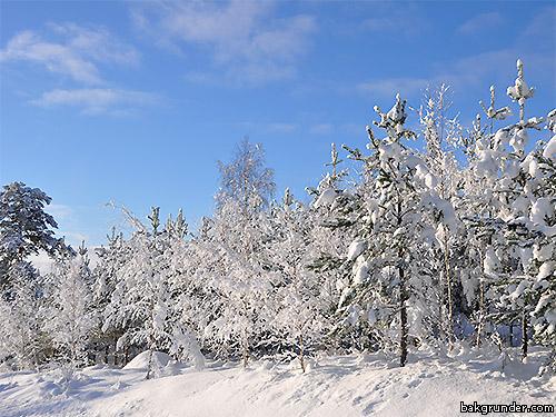 Vackra stämningsfulla vinterbilder