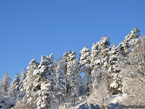 Vinter idyll