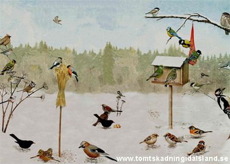 vanligaste vinterfåglarna