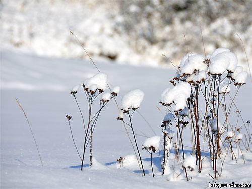 Vinter skrivbordsbild