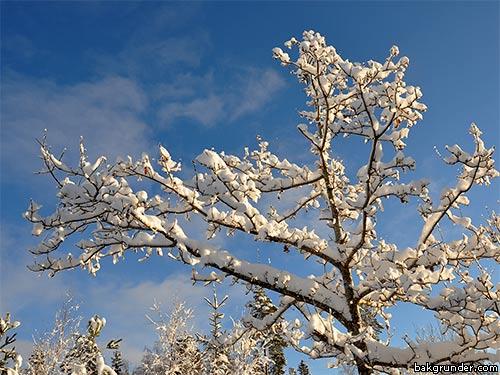 Stämningsfulla vinterbilder