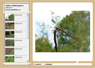 Webbfotogalleri i Photoshop